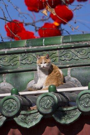 Chinesisches Neujahr: Das Jahr der Schlange bringt Umwälzungen ...