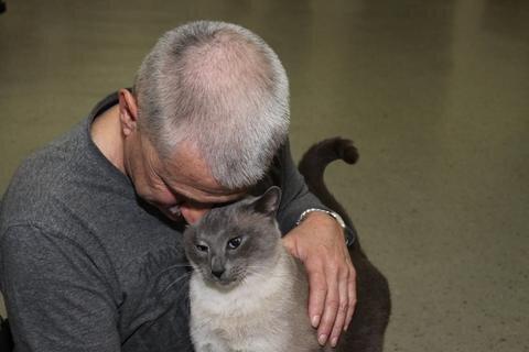 <p> Die zierlichen Thai-Katzen gelten als sehr anhänglich und schmusen gern mit ihren Menschen. Auch Vinnie und sein Herrchen genießen das sichtlich.</p>