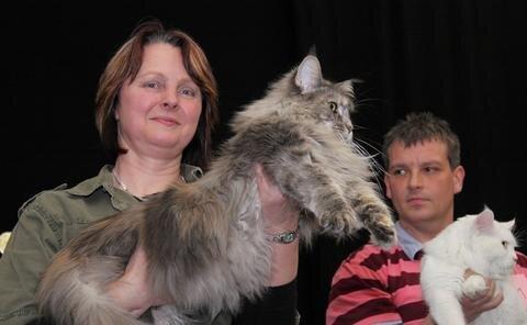 """<p> Diese Wuschel-Katze ist eine Maine Coon und heißt Betty vom Ranis. Vorgestellt wird sie hier von Züchterin Jana Rülke. Das zwei Jahre alte kastrierte weibliche Tier holte sich auf der Saxcat einen der begehrten """"Best-in-Show""""-Pokale.</p>"""