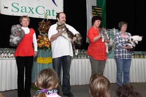 <p> Das waren die schönsten Katzen in den vier Wertungskategorien am Samstag, die zum Schluss noch einmal zum Endausscheid auf die Bühne mussten …</p>