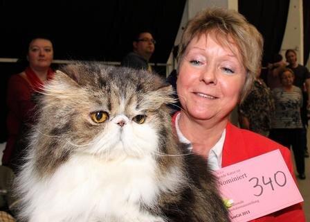 <p> Alter Katzen-Adel: Sylvine Schubert aus Chemnitz mit Weltchampion Hercules vom Vogtlandhof. Der reichlich zehn Jahre alte Perserkater trat bei der Saxcat in der Ehrenklasse an.</p>