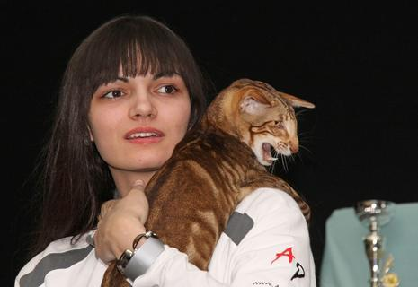 """<p> In der Kategorie Kurzhaar schlug Welysra Felis-House von Anke Ludwig, eine Orientalisch-Kurzhaar-Katze, am Sonntag alle Konkurrenten aus dem Feld und holte den """"Best-of-Best""""-Pokal. Das Tier wird im Juni zwei Jahre alt.</p>"""