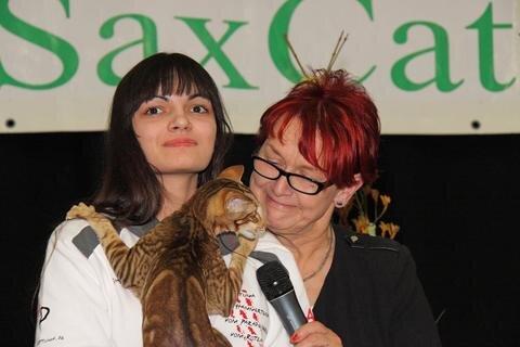 """<p> """"Interview""""-Versuche lohnen sich bei diesen exotischen Katzen durchaus, denn viele von ihnen miauen oft, gern und laut.</p>"""
