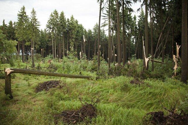 <p> Auch zwischen Geyer und Elterlein hinterließ das Unwetter Schäden. Hier wurden Bäume in einem Waldstück beschädigt.</p>