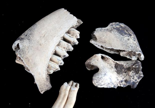 """<p> """"Hier wurde im großen Stil Schweinefleisch mit Hilfe von Salz und Rauch haltbar gemacht"""", sagte Archäologin Susanne Friederich vom Landesmuseum für Vorgeschichte Halle am Donnerstag an der Grabungsstelle.</p>"""