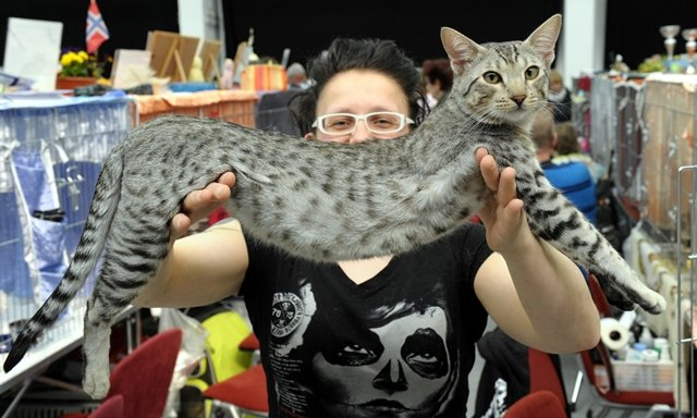 <p> Bianka Bonesky aus Oelsnitz/Erz. mit ihrer acht Monate alten Savannahkatze.</p>