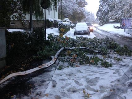 <p> ...auch hier zeigen sich schnell die Nachteile des Wetter-Umbruchs. So brach durch den Schnee bedingt ein Ast vom Baum herunter und blockierte teilweise eine Straße.</p>
