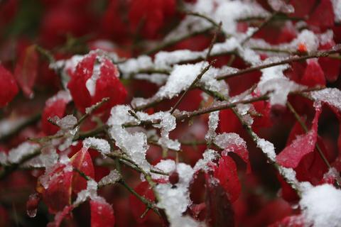 <p> Kräftige Herbstfarben treffen auf die ersten Eiskristalle. Auch wenn der Schnee in Chemnitz zunächste wieder abtauen wird, so gab der Winter heute auch hier sein Debut.</p>