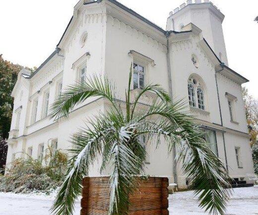 <p> Vor dem Gellert-Museum im Stadtpark Hainichen stehen noch Palmen und Kakteen, die nun vom Schnee bedeckt sind.</p>