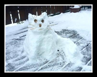 <p> Schneekatze</p>
