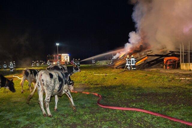 <p> Zwei Tiere wurden bei dem Brand verletzt, sodass noch ein Tierarzt gerufen werden musste.</p>