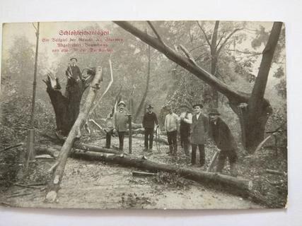 """<p> Aus dem """"Chemnitzer Kalender"""" (1917): """"Am schrecklichsten aber waren die Verwüstungen an den herrlichen Schloßteichanlagen. Hier fielen eine Unmenge der schönsten und stattlichsten Stämme dem Wirbelsturme zum Opfer, der sie entweder ganz aus der Erde mit dem Wurzelwerk heraushob oder sie in halber Höhe knickte oder der stärksten Äste beraubte.""""</p>"""