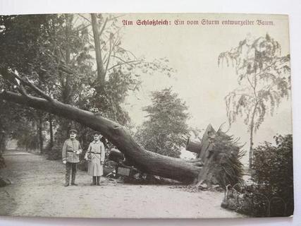 """<p> Ein von der Windhose am späten Nachmittag des 27. Mai 1916 entwurzelter Baum am Schloßteich. """"Die riesenhafte Kraft, die der entfesselten Sturmesgewalt innewohnte, ist nach menschlichen Begriffen kaum fassbar"""", hieß es zwei Tage nach dem Unwetter im """"Chemnitzer Tageblatt"""".</p>"""