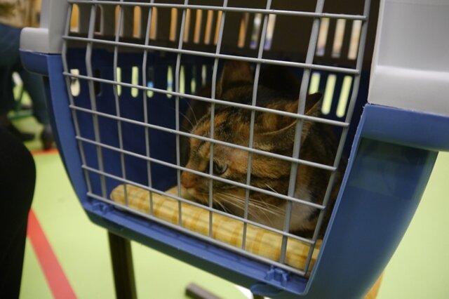 <p>Katze Dana musste in Box verharren.</p>