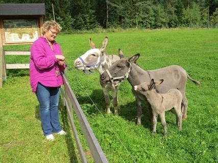 <p>16. August: Süßer Anblick auf dem Gläsernen Bauernhof in Siebenbrunn: Mitte August kommt dort ein kleiner Esel auf die Welt. Hof-Betreiberin Susanne Danz-Jakob ruft anschließend einen Namenswettbewerb aus. Das Tier wird schließlich auf den Namen Joseph Naseweiß getauft.</p>