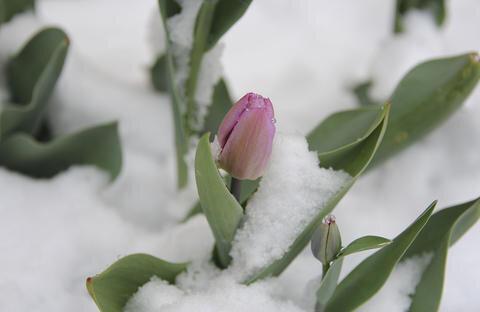 <p>Der Winter kehrte auch im Oberen Vogtland zurück.</p>