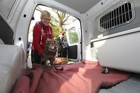 <p>Zu den betroffenen Einrichtungen gehörte auch das Plauener Tierheim. 20 Hunde und mehrere Katzen zogen am Vormittag vorübergehend in leerstehende Büros des früheren Landratsamtes in Oelsnitz/V. um.</p>
