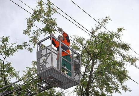 <p>Der örtliche Energieversorger musste erst den Strom abstellen, bevor die Feuerwehr von der Drehleiter aus den Baum schneiden konnte.</p>