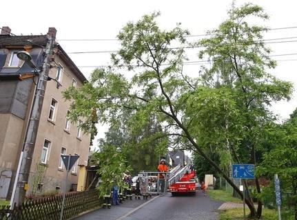 <p>Ein Baum verfing sich in der Freileitung.</p>