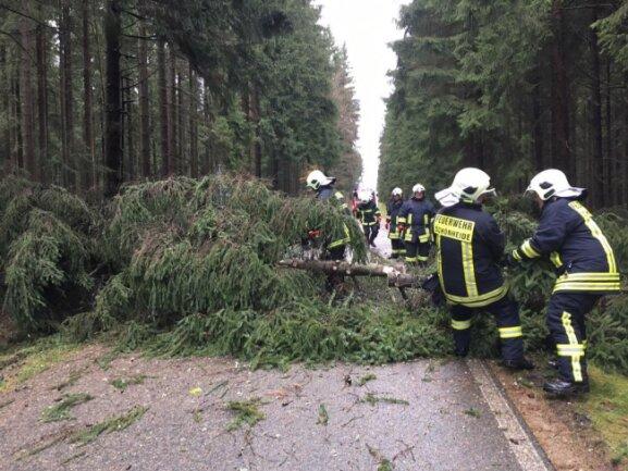 <p>Auch betroffen war die Carolagrüner Straße in Schönheide: Hier mussten 10 Fichten, die auf die Straße gefallen waren, von der Feuerwehr klein geschnitten werden.</p>