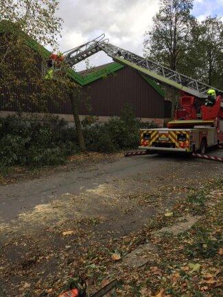 <p>In der Schiersandstraße in Chemnitz sind mehrere Bäume umgestürzt, unter anderem auf den Gartenfachmarkt Richter.</p>