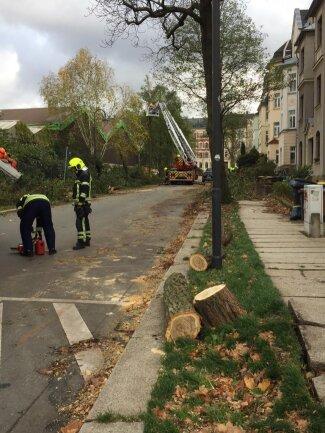 <p>Die Feuerwehr war mit drei Fahrzeugen im Einsatz in der Schiersandstraße, um die Bäume zu fällen und zu zerlegen.</p>