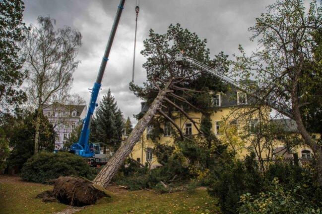 <p>Die Feuerwehr zog ein Kranunternehmen hinzu, um den Baum am Hospitalweg in Freiberg zu sichern.</p>