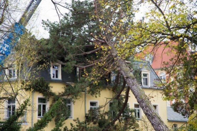 <p>Am Hospitalweg in Freiberg ist von einem benachbarten Grundstück ein Baum auf ein Haus gefallen.</p>