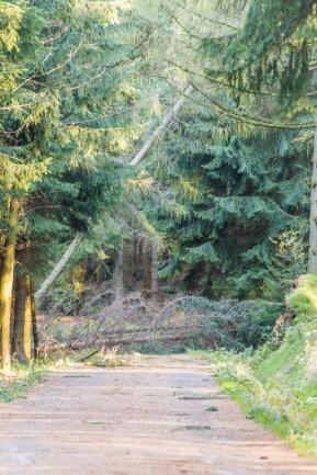 <p>Viele Bäume sind in erzgebirgischen Wäldern entwurzelt oder beschädigt wurden.</p>