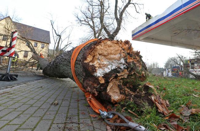 <p>Dabei zeigte sich, dass der Baum an der Bruchstelle morsch war. Die Dresdner Straße war für zwei Stunden gesperrt.</p>