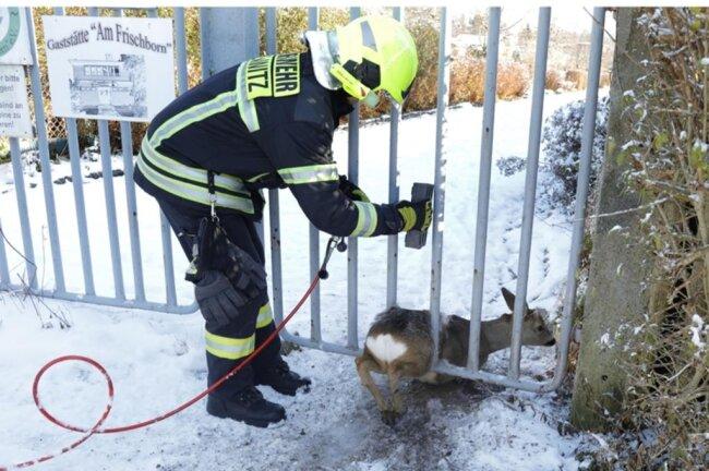<p>... konnten die Feuerwehrmänner die Gitterstäbe aufbiegen.</p>
