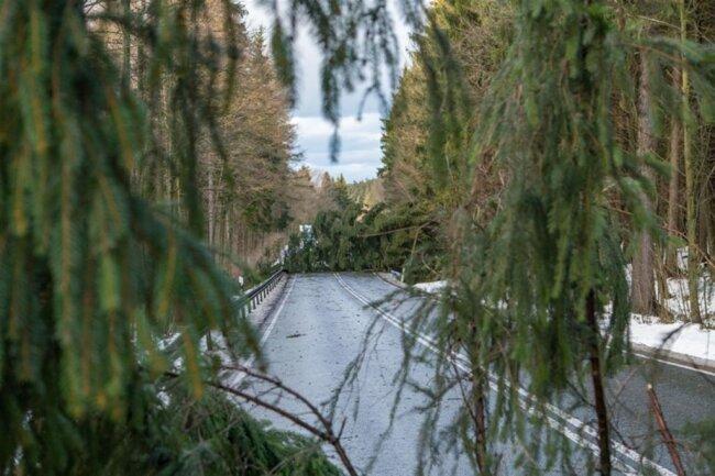<p>Mehrere Bäume kippten um und machten ein Durchfahren unmöglich.</p>