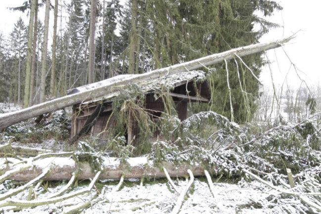 <p>In Oberjößnitz hat eine umgestürzte Fichten eine Holzhütte zerlegt.</p>