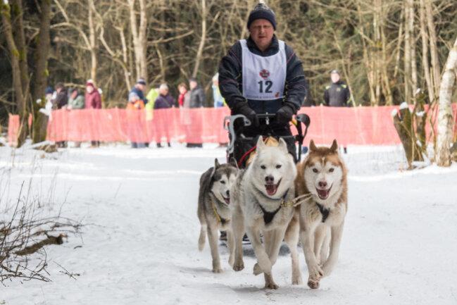 """<p>""""Der Schnee reicht sogar für die Wettkämpfe aus"""", sagt sich Erhard Feickert (Foto) vom Lausitzer Sportverein reinrassiger Schlittenhunde.</p>"""