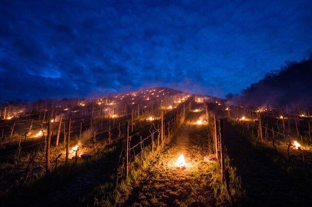 """<p>Lokalfoto des Jahres, 3. Platz: """"Feuer gegen Eis"""" von André Wirsig.Unzählige kleine Feuer erleuchten einen Weinberg am Klausenberg in Meißen. Mit der ungewöhnlichen Schutzmaßnahme möchte ein Weingut die bereits am weitesten ausgetriebenen Dunkelfelder vor Frost schützen. Sonst droht hier ein Totalausfall.</p>"""