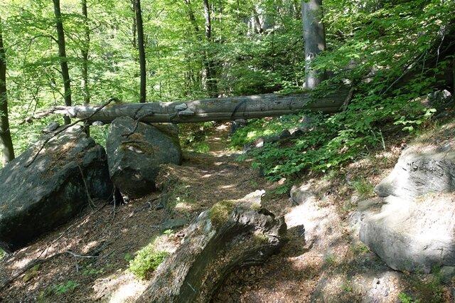 <p>Der Weg führt auch durch Eichen-Buchen-Mischwälder...</p>