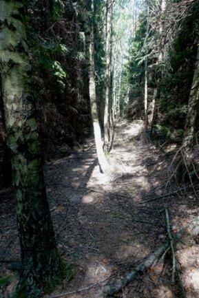 <p>Ein Weg? Ein Weg! Dass hier schon immer einer langführte, ist an den Birken zu erkennen, die zwischen die Fichten gepflanzt wurden, als Markierung.</p>