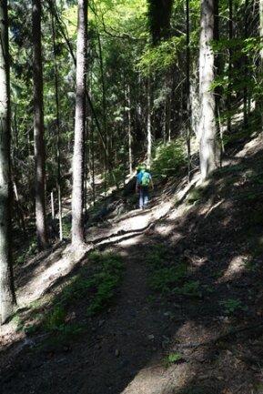 <p>Der Weg führt auch durch hohe Nadelwälder.</p>