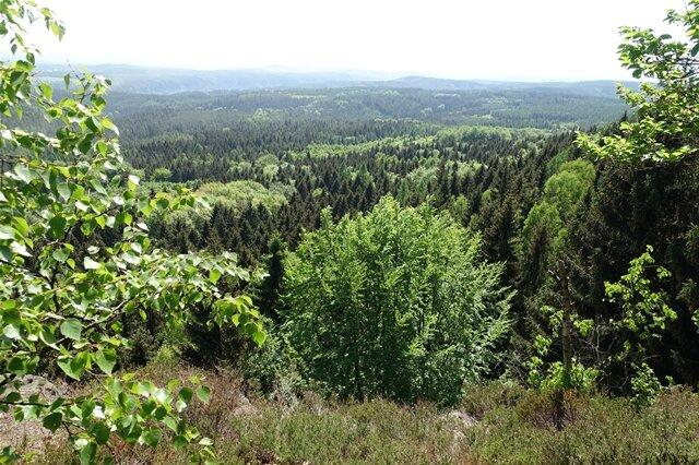 <p>Wald in Hülle und Fülle.</p>