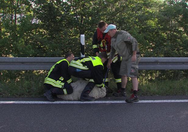 """<p xmlns:php=""""http://php.net/xsl"""">Ein entlaufenes Schaf hat am Mittwochmorgen auf der Autobahn 4 bei Meerane für einen Einsatz von Feuerwehr und Polizei gesorgt.</p>"""