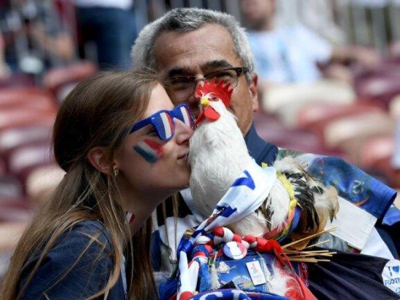 <b>Gallischer Hahn</b><br/>Die Nigerianer dürften sich wundern, warum die Franzosen Federvieh zum Spiel gegen Dänemark mit ins Stadion nehmen dürfen. Bei den Afrikanern mussten die Hühner draußen bleiben - außerdem ist der Vogel ausgestopft. Foto:Federico Gambarini<br/>26.06.2018 (dpa)