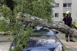 <p>Das Gewächs fiel auf einem Parkplatz an der Helbersdorfer Straße auf einen Ford und einen VW.</p>
