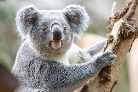 <p>Das zweijährige Tier kam aus dem Zoopark Beauval in Frankreich nach Leipzig, wie der Zoo mitteilte.</p>