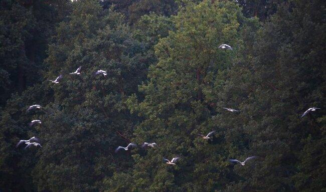 <p>Unter anderen interessiert den Naturschützer die Frage, wo die Zugvögel ursprünglich herkommen.</p>