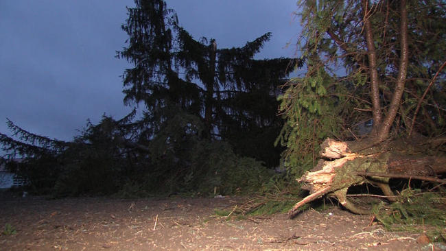 <p>Unzählige Bäume stürzten um.</p>
