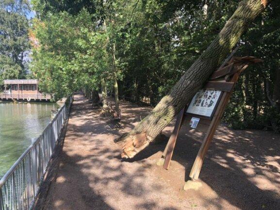 <p>Auch im Tierpark Hirschfeld ...</p>