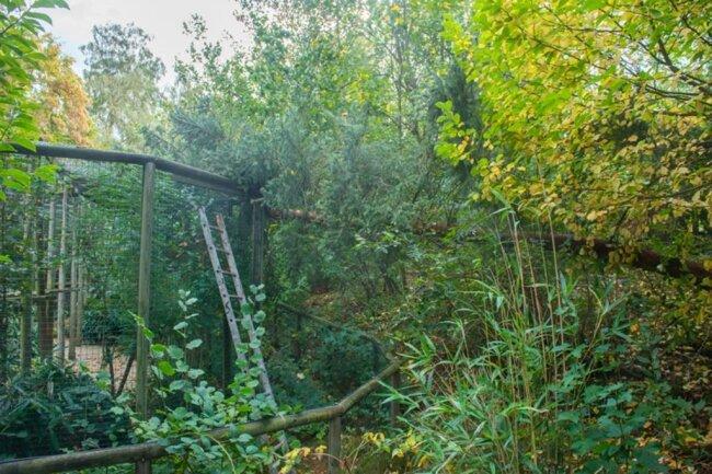 <p>Im Auer Zoo der Minis stürzte ein Baum auf das Leopardengehege.</p>