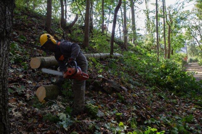 <p>Im Wald fanden am Montag Aufräumarbeiten statt.</p>