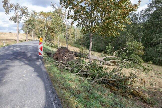 <p>Zwischen Spinnerei und Gelenau stürzte ein Baum am Straßenrand um.</p>