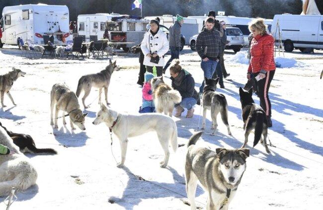 <p>Die Besucher konnten im Camp den Tieren ganz nahe sein...</p>
